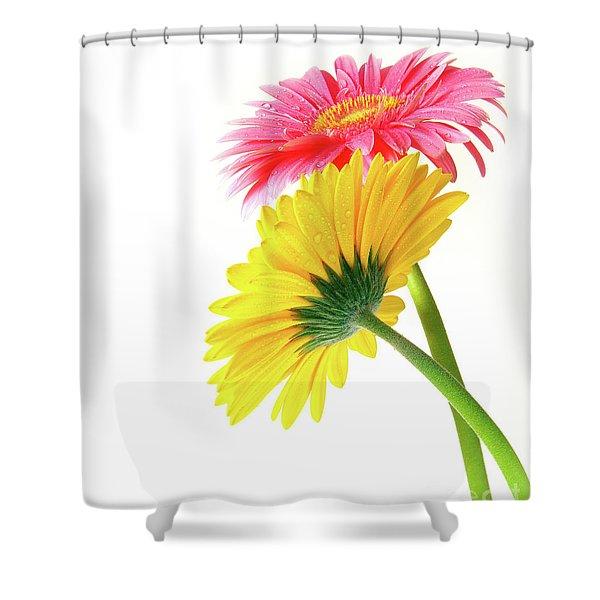 Gerber Flowers Shower Curtain by Carlos Caetano