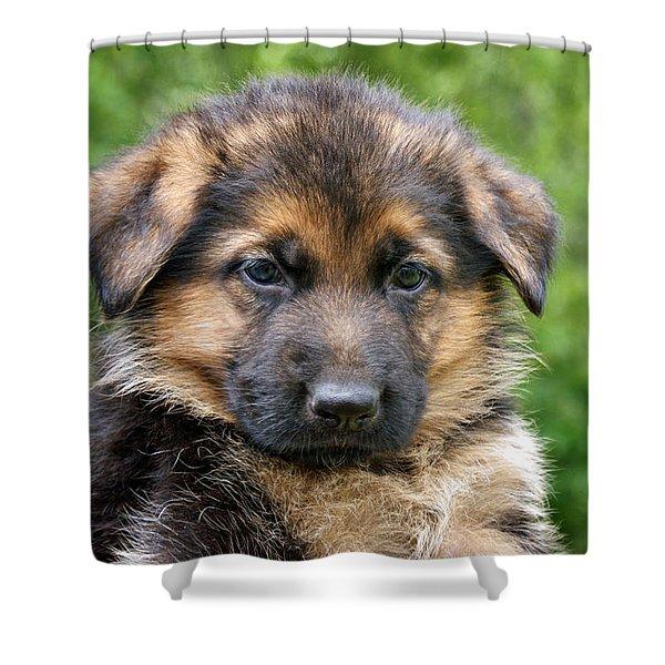 German Shepherd Puppy Shower Curtain by Sandy Keeton