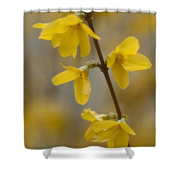 Golden Forsythia Shower Curtain by Kathy Clark