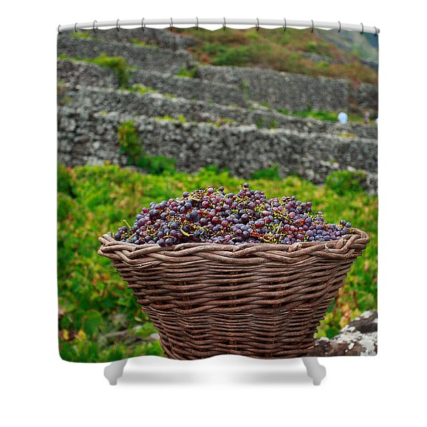 Grape harvest Shower Curtain by Gaspar Avila