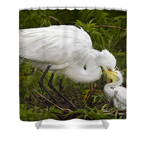 Great Egret and Chick Shower Curtain by Susan Candelario