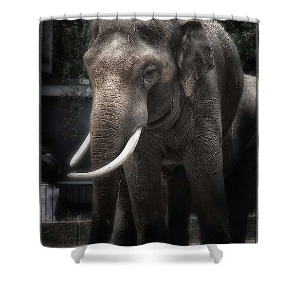 Hanging Out Shower Curtain by Joan Carroll