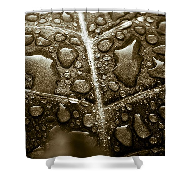 - Havana Corojo Tobacco Leaf Shower Curtain by Frank Tschakert