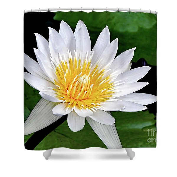 Hawaiian White Water Lily Shower Curtain by Sue Melvin