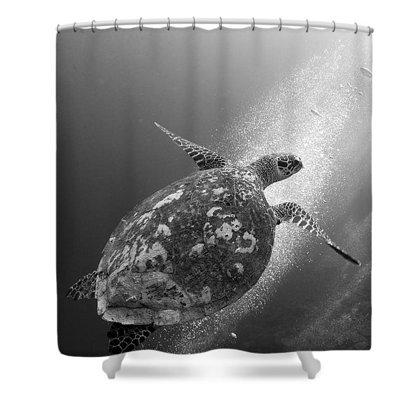 Hawksbill Turtle Ascending Shower Curtain by Steve Jones