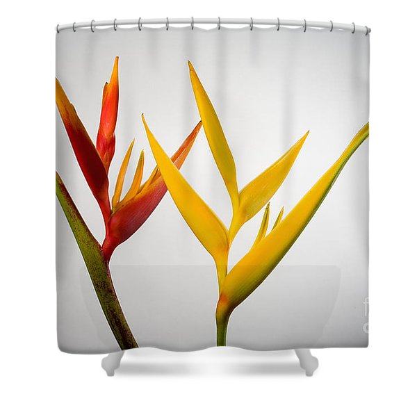 Heliconia Shower Curtain by Tomas del Amo - Printscapes