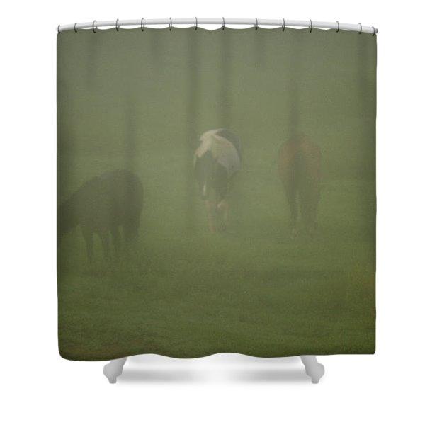 Horses Grazing In The Mist Shower Curtain by Steve Gadomski