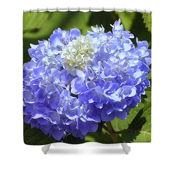 Huge Hydrangea Shower Curtain by Al Powell Photography USA