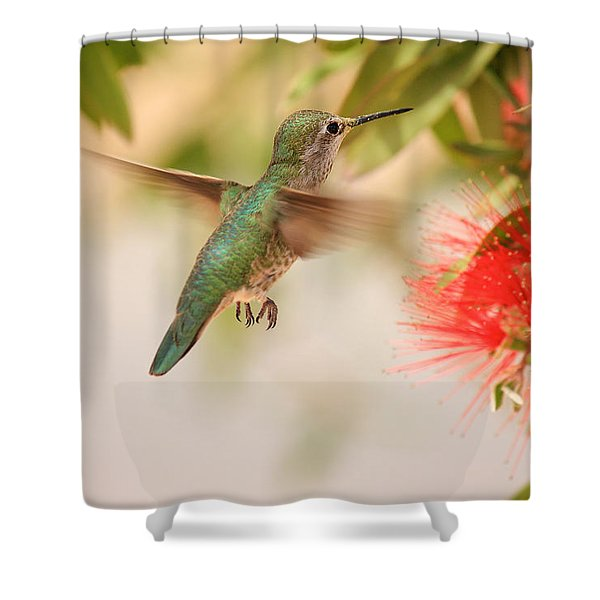 Hummingbird In Paradise Shower Curtain by Penny Meyers