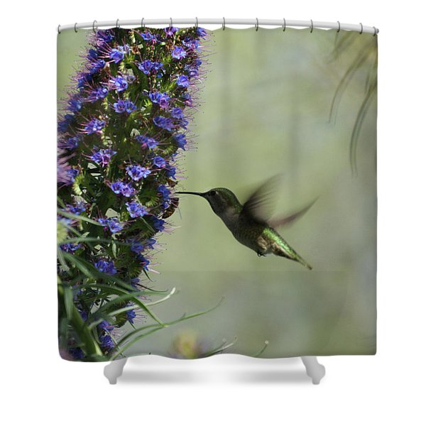 Hummingbird Sharing Shower Curtain by Ernie Echols