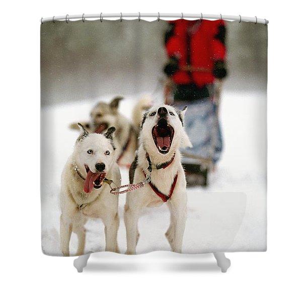Husky Dog Racing Shower Curtain by Axiom Photographic