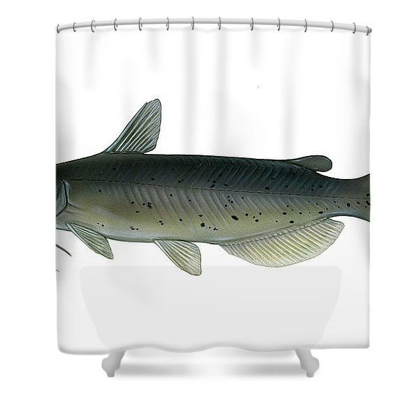 Illustration Of A Channel Catfish Shower Curtain by Carlyn Iverson