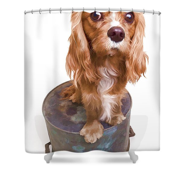 King Charles Spaniel Puppy Shower Curtain by Edward Fielding