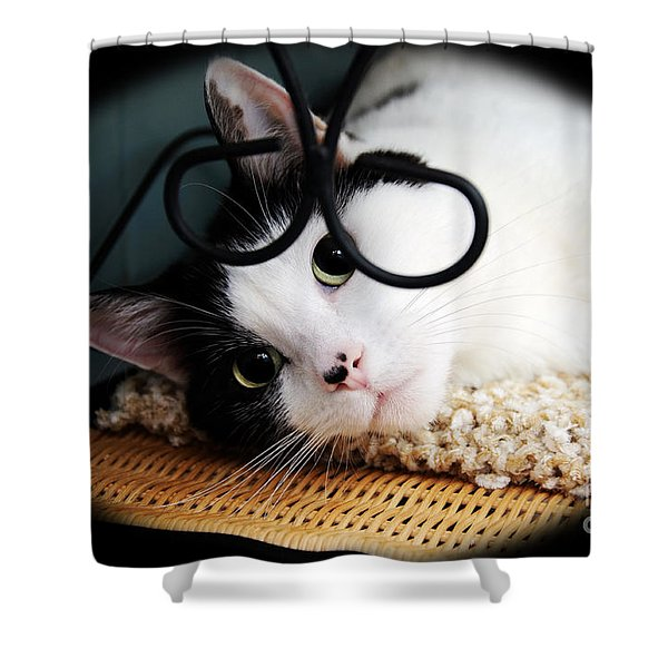 Kitty Cuteness Soft And Sweet Shower Curtain by Andee Design