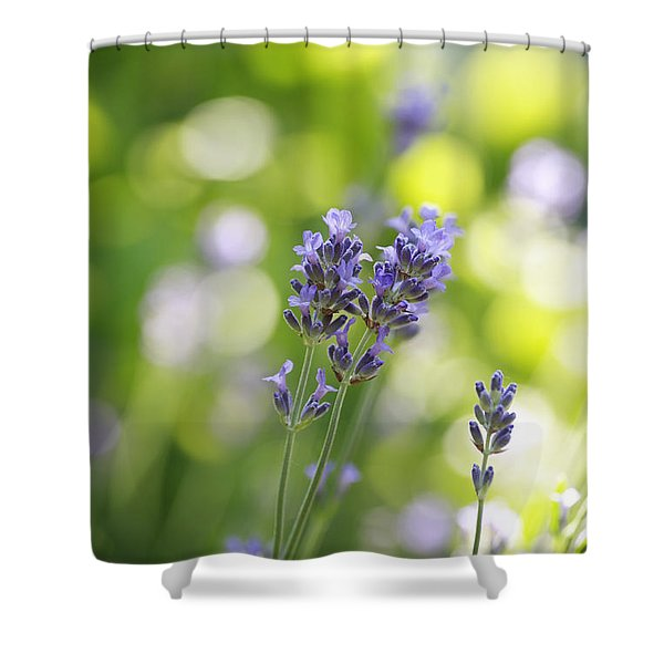 Lavender Garden Shower Curtain by Frank Tschakert