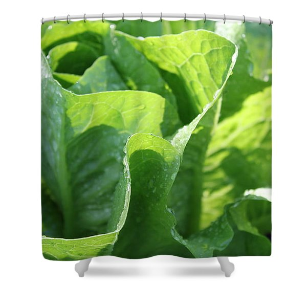 Leaf Lettuce Shower Curtain by Lauri Novak