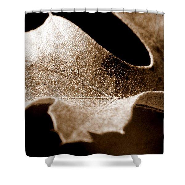 Leaf Study in Sepia Shower Curtain by Lauren Radke