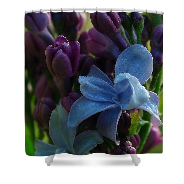 Lilac Shower Curtain by Juergen Roth