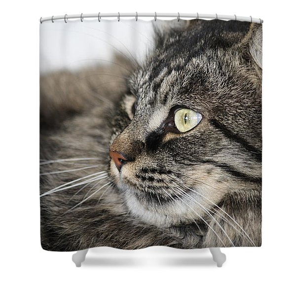 Maine Coon Cat Shower Curtain by Mary-Lee Sanders