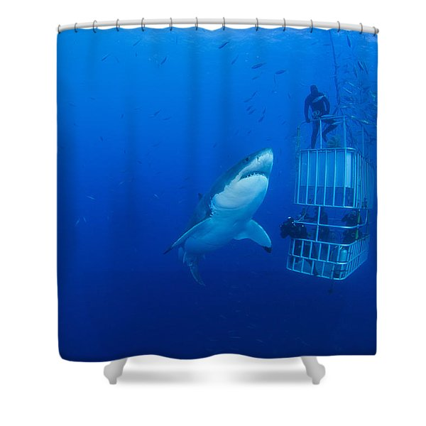 Male Great White With Cage, Guadalupe Shower Curtain by Todd Winner