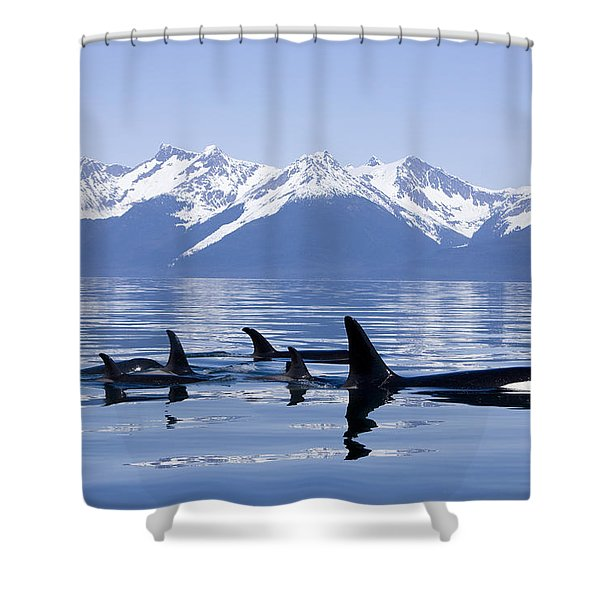 Many Orca Whales Shower Curtain by John Hyde - Printscapes