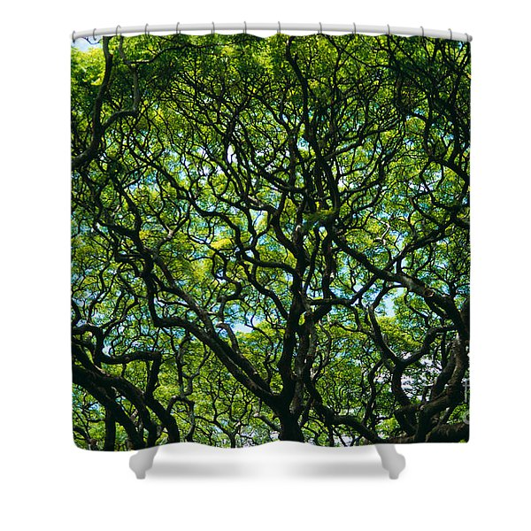Monkeypod Canopy Shower Curtain by Peter French - Printscapes
