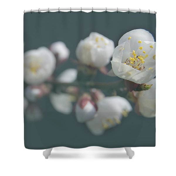 Moorpark Apricot B 4212 Shower Curtain by Michael Peychich