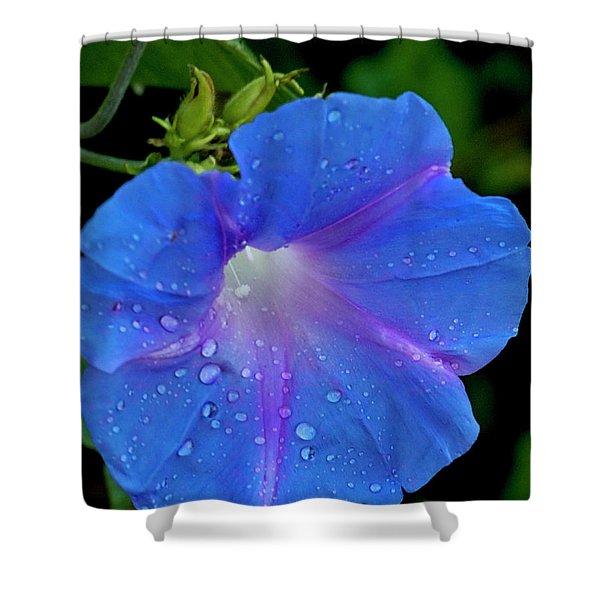 Morning Glory Dew Shower Curtain by Dennis Reagan