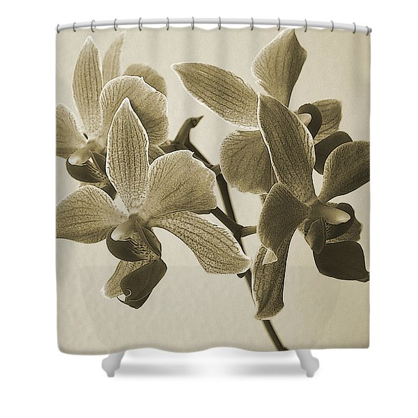 Morning Orchid Shower Curtain by Ben and Raisa Gertsberg