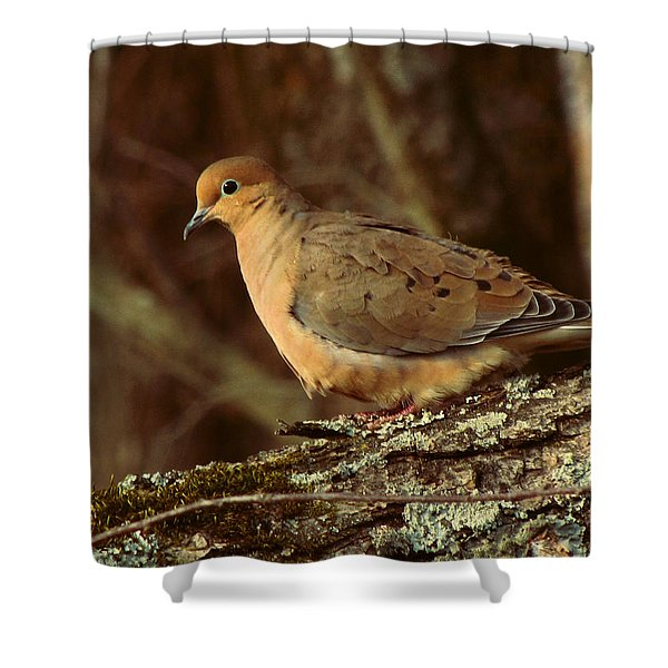 Mourning Dove At Dusk Shower Curtain by Amy Tyler