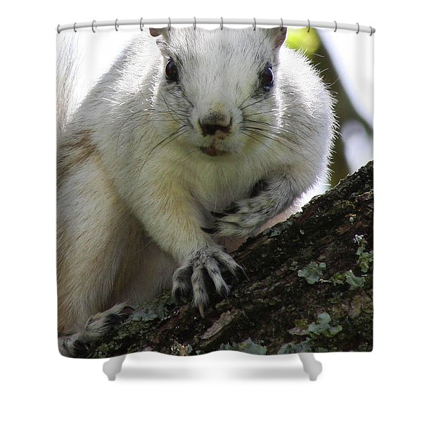 Mr. Inquisitive I  Shower Curtain by Betsy C  Knapp