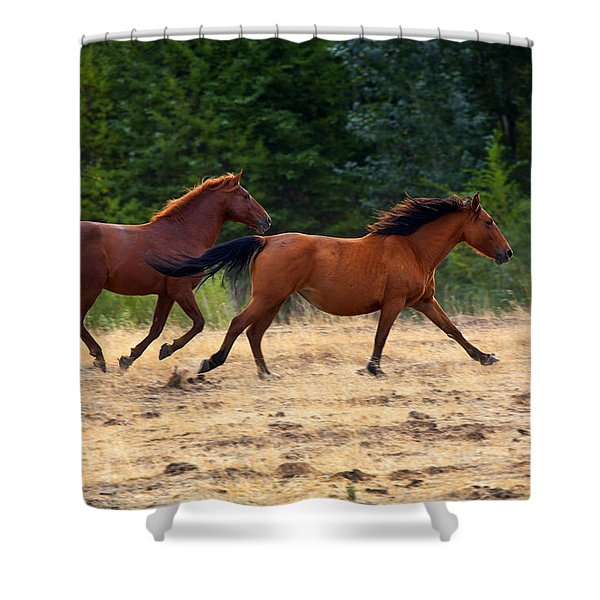 Mustang Gallop Shower Curtain by Mike  Dawson