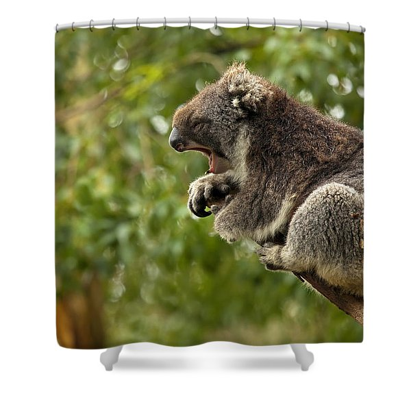 Naptime Shower Curtain by Mike  Dawson