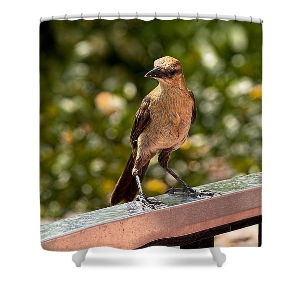 On The Rail Shower Curtain by Christopher Holmes