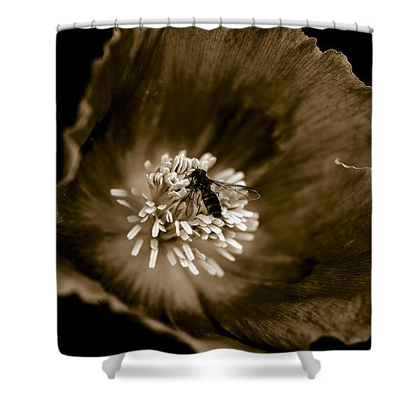 - Opium Poppy Shower Curtain by Frank Tschakert