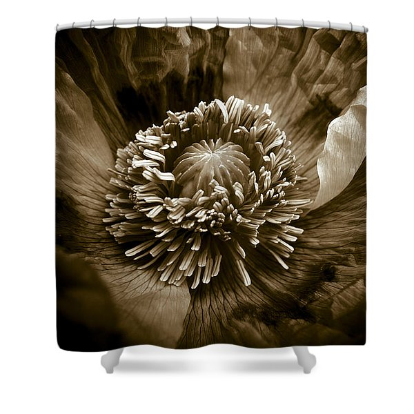 - Opium Poppy Papaver Somniferum Shower Curtain by Frank Tschakert