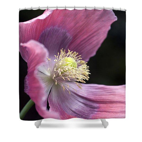 Shower Curtains - Opium Poppy - Papaver Somniferum Giganteum Shower Curtain by Frank Tschakert