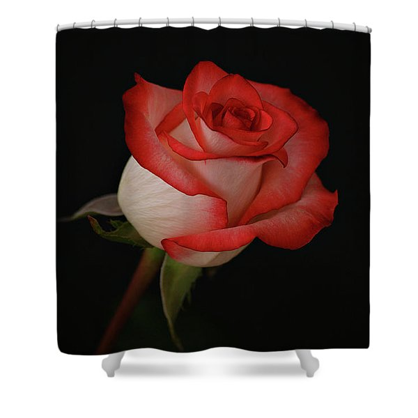 Orange and White Rose Shower Curtain by Sandy Keeton