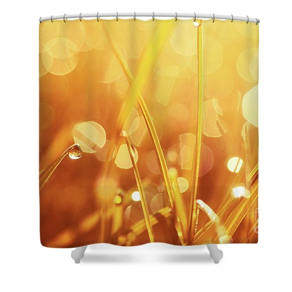Orange Awakening Shower Curtain by Aimelle