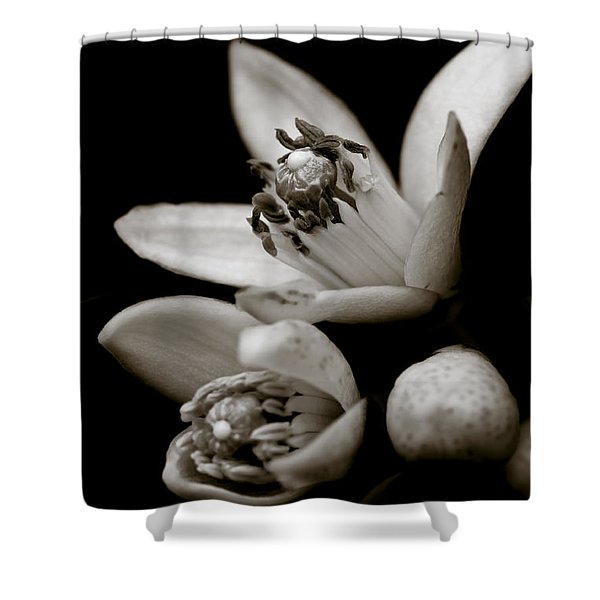 - Orange Blossoms Shower Curtain by Frank Tschakert