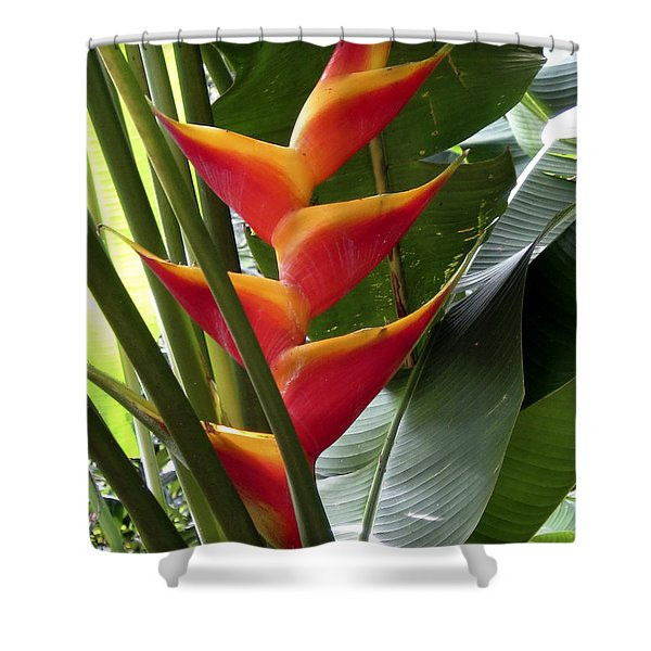 Orange Paradise Shower Curtain by Cheryl Young
