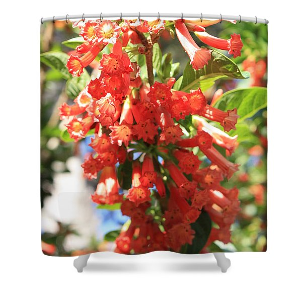 Orange Trumpet Flower Shower Curtain by Carol Groenen