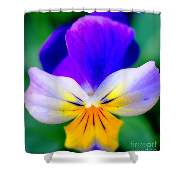 Pansy Shower Curtain by Kathleen Struckle