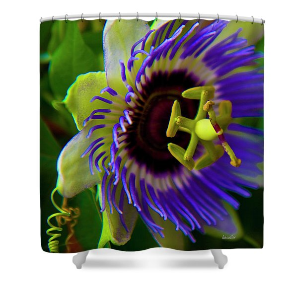 Passion-Fruit Flower Shower Curtain by Betsy C  Knapp
