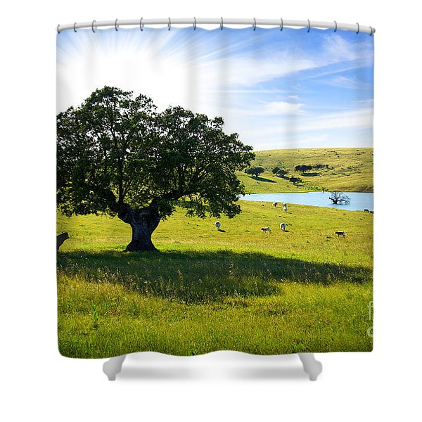 Pasturing Cows Shower Curtain by Carlos Caetano