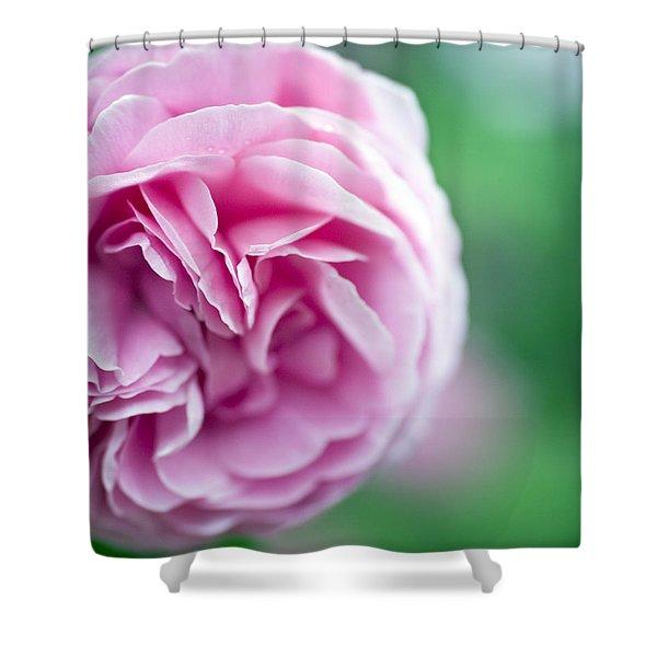 Pink Bourbon Rose Louise Odier Shower Curtain by Frank Tschakert