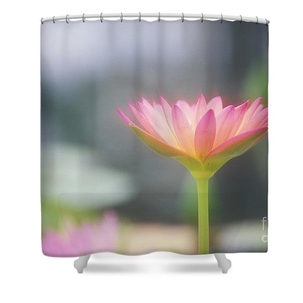 Pink Water Lily Shower Curtain by Ron Dahlquist - Printscapes