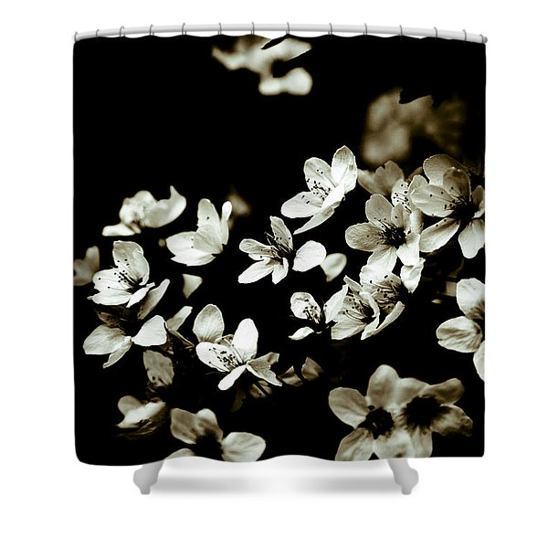 - Plum Blossoms Shower Curtain by Frank Tschakert