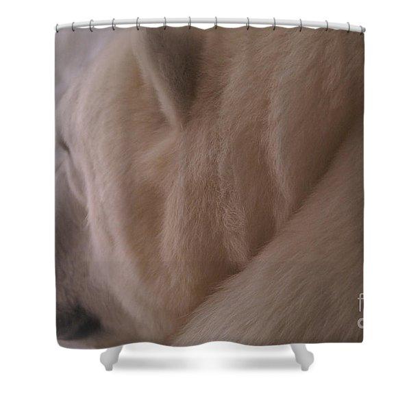 Polar Dream Shower Curtain by Linda Knorr Shafer