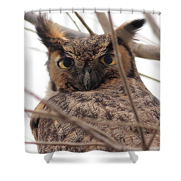 Portrait of a Great Horned Owl Shower Curtain by Wingsdomain Art and Photography
